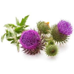 Milk Thistle Ekstrakt