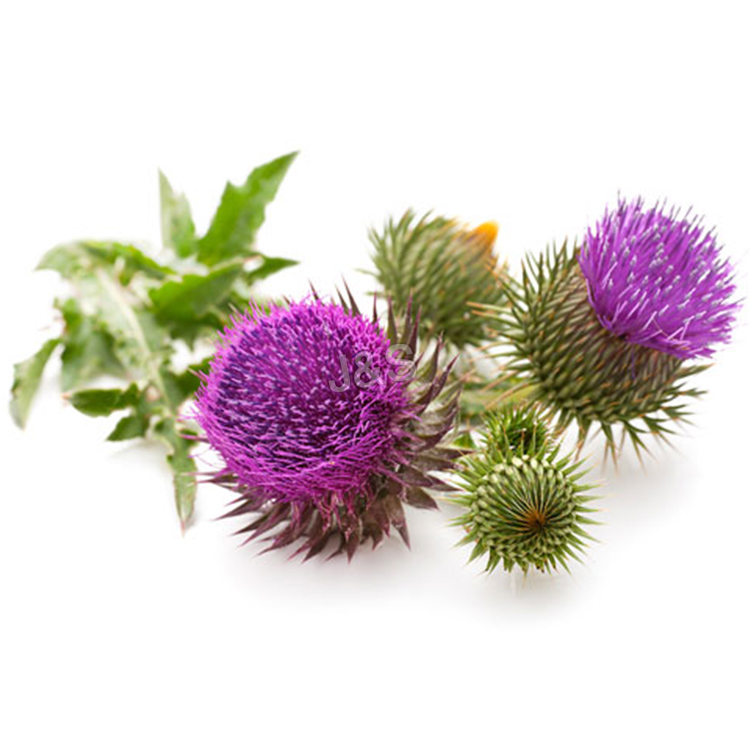 China Top 10 Milk Thistle Extract Factory for Azerbaijan
