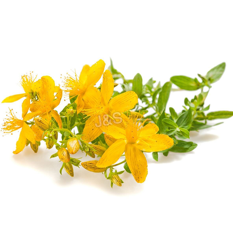Newly Arrival  St John's wort extract Factory from Milan