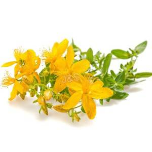 How much do you know about St.John's wort?