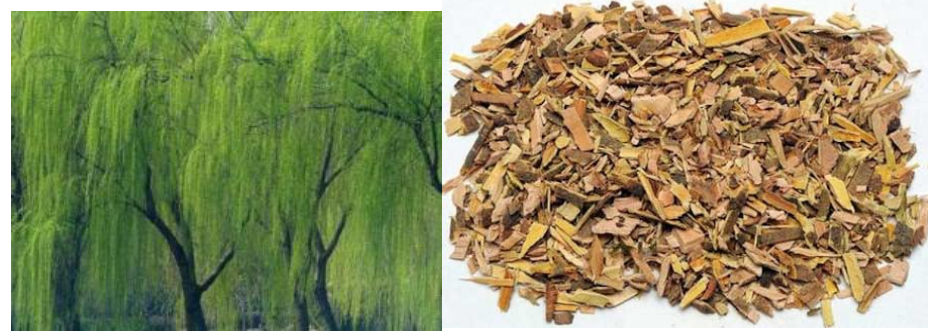 White Willow Bark Extract11122