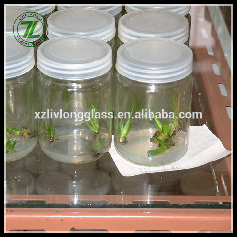 WHOLESALE Clear Tissue Culture Plant Glass Bottle with Plastic Cap