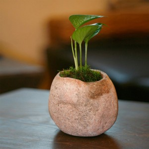 Small indoor rock stone flower pot