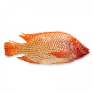 Red tilapia