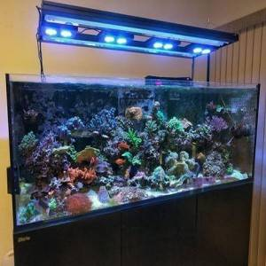 Aquarium Illumination