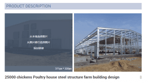 25000 chickens Poultry house steel structure farm building design