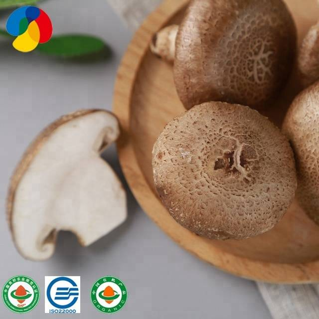 100% Original Exotic Shiitake Mushroom Spawn - lentinus edodes spawn/shiitake mushroom spawn/mushroom log/bag – Qihe detail pictures