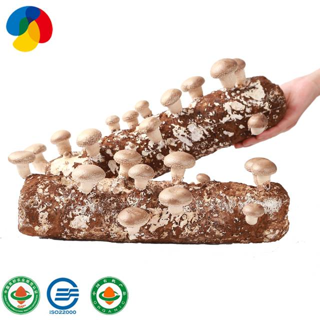 Best Price onKing Oyster Mushroom Spawn For Mushroom Farm - ODM Manufacturer Shiitake Mushroom Bag Mushroom Spawn Grow Bags – Qihe Featured Image