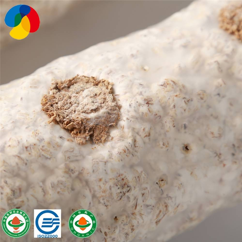 Special Price for Shiitake Mushroom Log Shape Cultivating Block