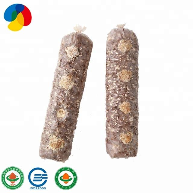 Factory source King Oyster Mushroom Seed - Manage Easily QiHe Shiitake Mushroom Spawn With Good Service – Qihe detail pictures
