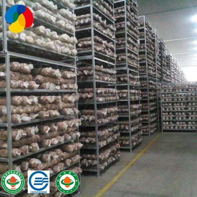 Factory high quality shiitake mushroom spawn logs log for export