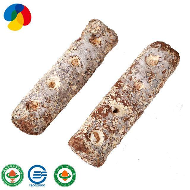 Bestseller cultivating fresh shiitake spawn mushroom sticks for sale