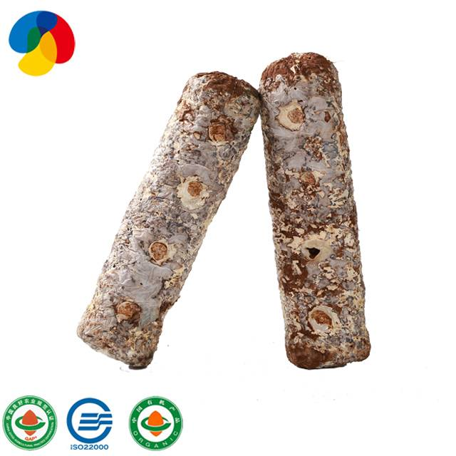 OEM manufacturer Dried Flower Shiitake Mushroom - Excellent quality Edible Fungus Flower Shiitake Mushroom Bag Mycelium Spawn Shiitake Spawn Growing Log – Qihe Featured Image