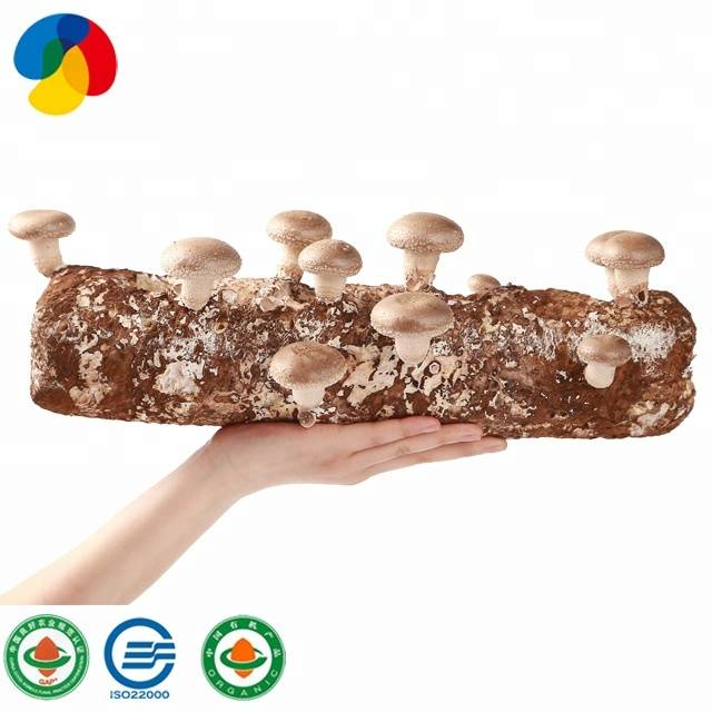 Factory Supply Oyster Mushroom Growing Kit - Factory Price Organic Shiitake Mushroom spawn bag for sale – Qihe Featured Image