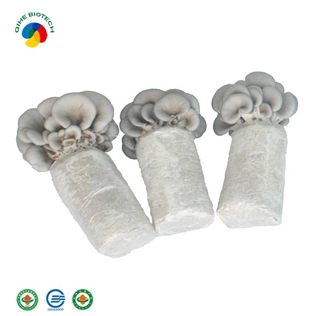 High reputation Shanghaidetan After Sale System Oyster Mushroom Spawn For Sale (offer Technical Guidance ) Yearly Mass Product