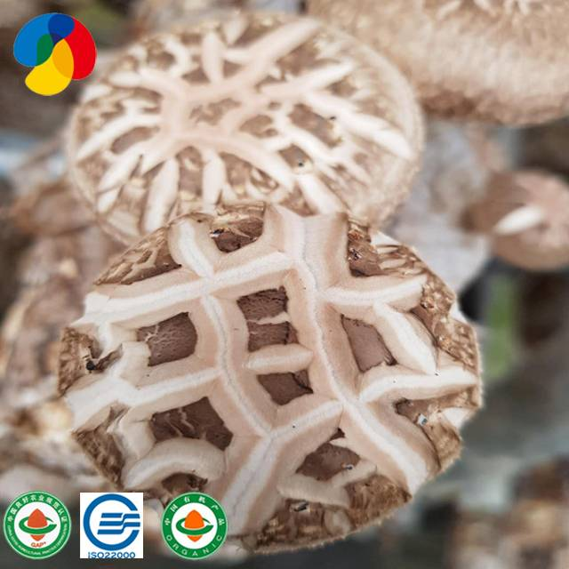 New Arrival China Shiitake Mushroom Substrate - ODM Factory Frozen Wild Mushrooms – Qihe
