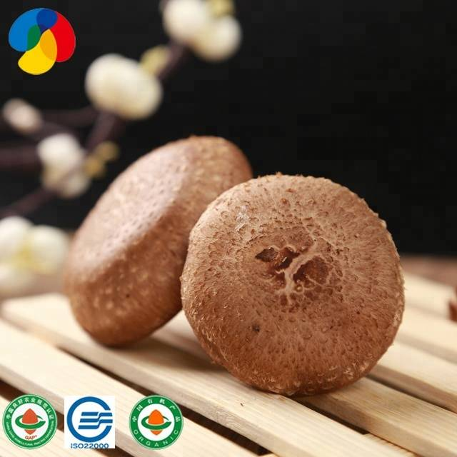 Bottom price Beautiful Oyster Mushroom Compost - cultivated Pure natural pollution free factory direct sales shiitake mushroom spawn – Qihe