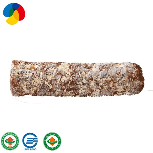 Cultivated easily shiitake mushroom spawn logs for export