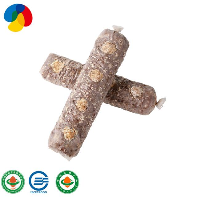 Factory direct sale organic mushroom spawn / logs for mushroom farm