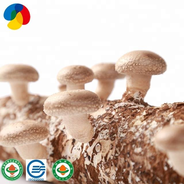 Renewable Design for Mushroom - CE Certificate Origin Of Bulk Dried Shiitake Mushrooms Cultivation With – Qihe detail pictures