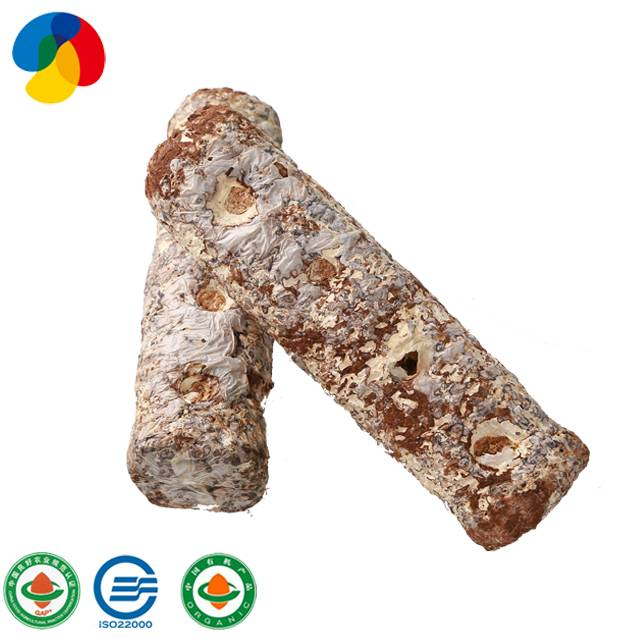 OEM Manufacturer Apple Fruiting Wood Oyster Mushroom Spawns - Natural Organic Sawdust Mushroom Spawn easy cultivate shiitake – Qihe detail pictures