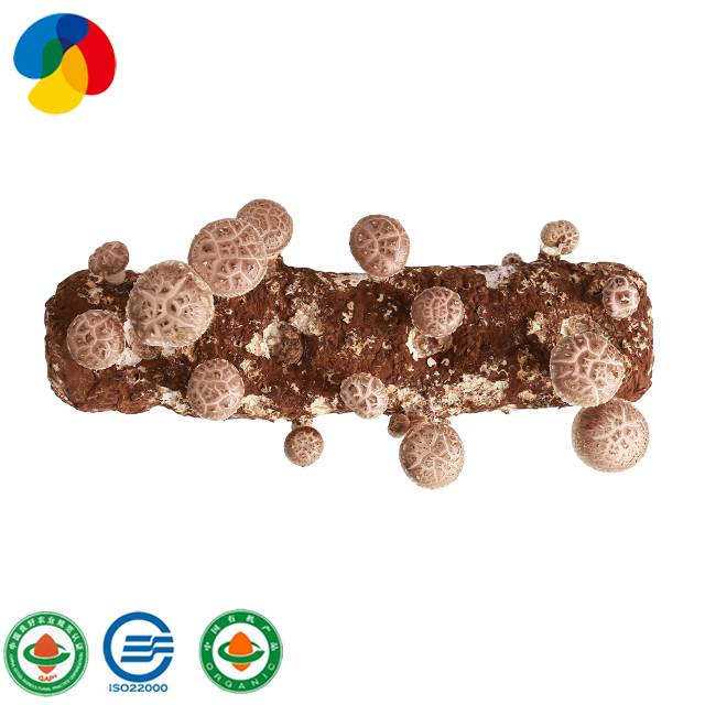 Professional Design Shiitake Seeds - Factory direct sale organic mushroom spawn / logs for mushroom farm – Qihe detail pictures