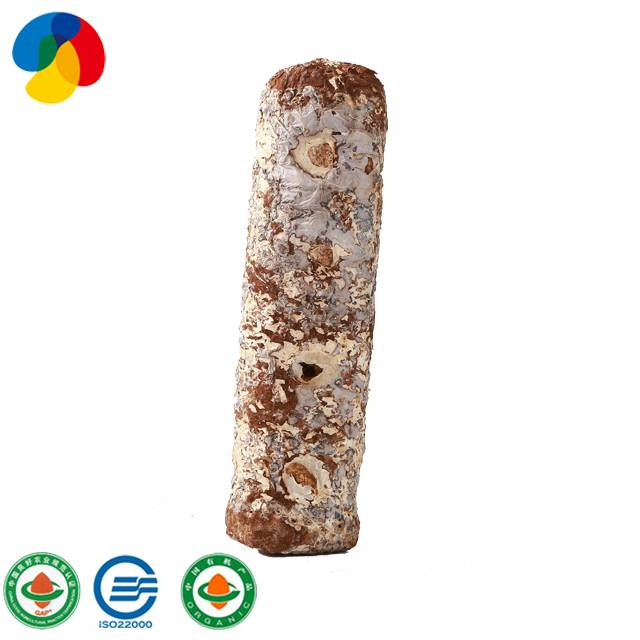 OEM Manufacturer Apple Fruiting Wood Oyster Mushroom Spawns - Natural Organic Sawdust Mushroom Spawn easy cultivate shiitake – Qihe Featured Image