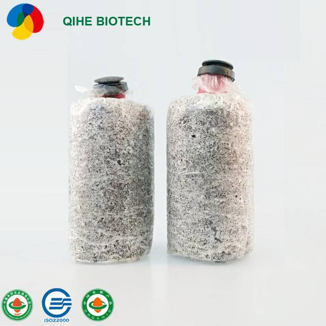 Well-designed King Oyster - Quots for Organic Cultivation Dried Shiitake Mushroom Flower Mushroom – Qihe Featured Image