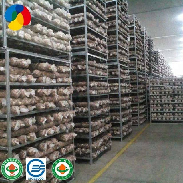 Factory source King Oyster Mushroom Seed - Manage Easily QiHe Shiitake Mushroom Spawn With Good Service – Qihe Featured Image