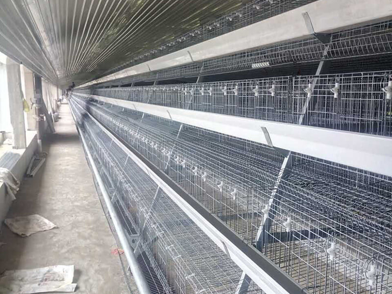 Free sample for Steel Structure Egg Poultry Farm -
