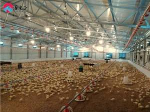 Poultry Shed Chicken Farm Building House From XGZ Brand
