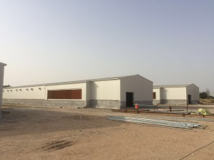 Prefabricated steel chicken layer cage poultry farm building in Qatar