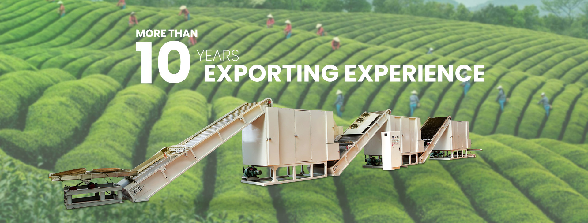 More Than 10 Years  Exporting Experience