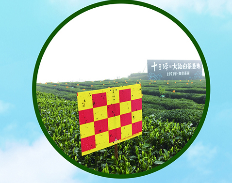 Full range of tea garden insects management