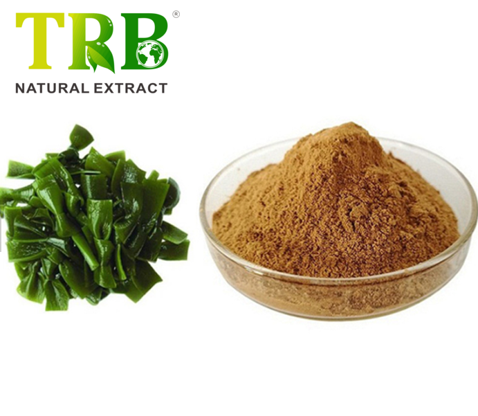 Well-designed Olmifon - Kelp Extract 20% polysaccharides – Tong Rui Bio Featured Image