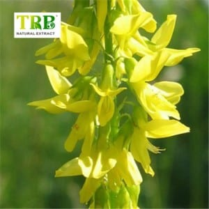 Melilotus Extract/Sweet Clover Extract