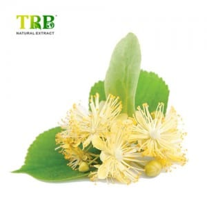 Low price for Natural Cosmetic Ingredient Tilia Cordata Flower Extract