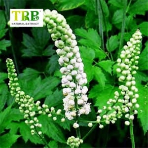 ODM Factory Herb Triterpene Glycosides Black Cohosh Extract