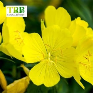 Factory Customized China Evening Primrose Oil