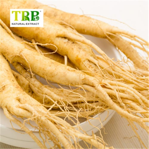 Panax Ginseng Root Extract Featured Image