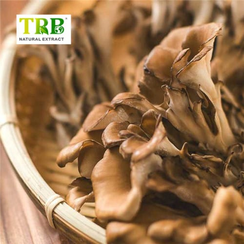 Factory Supply Apigenina - Massive Selection for Plant Ectract Wild Organic Maitake Mushroom Extract,10%-30% Polysaccharides Maitake Extract – Tong Rui Bio detail pictures