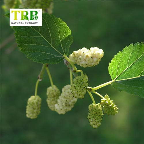 Mulberry Leaf Extract 1-DNJ/1-Deoxynojirimycin Featured Image