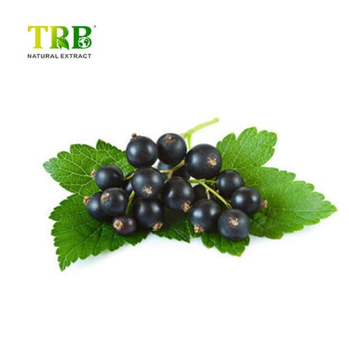 Massive Selection for Bilberry Liquid Extract - Good Quality 100% Organic Black Cumin Seed Oil – Tong Rui Bio