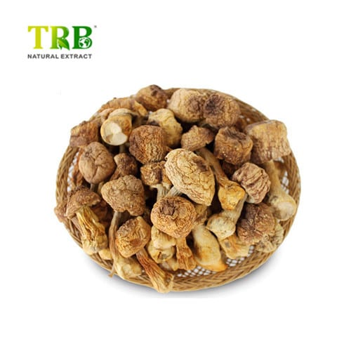 Factory Supply Apigenina - Massive Selection for Plant Ectract Wild Organic Maitake Mushroom Extract,10%-30% Polysaccharides Maitake Extract – Tong Rui Bio Featured Image