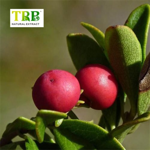 China Gold Supplier for Raspberry Extract Baking - Hawthorn Leaf Extract – Tong Rui Bio Featured Image