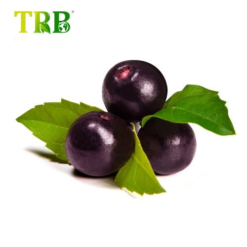 Acai Berry Extract Featured Image