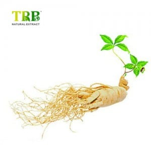 Panax Ginseng Leaf Extract