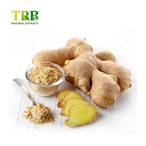 Ginger Extract Featured Image