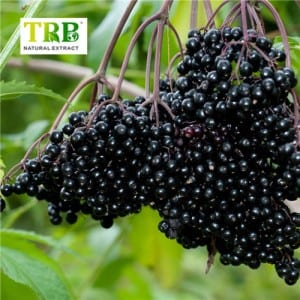 Elderberry Dondoo
