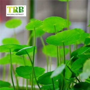 Good Wholesale Vendors China Centella Asiatica Extract Raw Material Gotu Kola Extract in Cosmetic